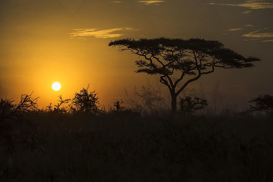 Even if you don't spot a lion, a trip to Tanzania will leave you with memories for a lifetime