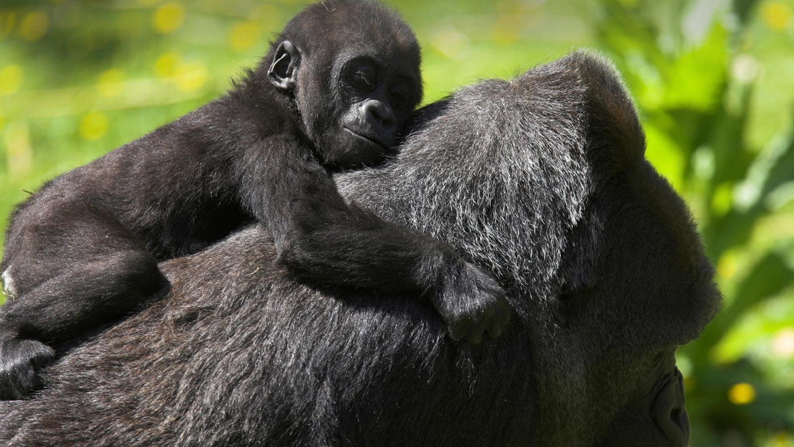 Uganda Amp Gorillas Overland In Uganda Africa G Adventures