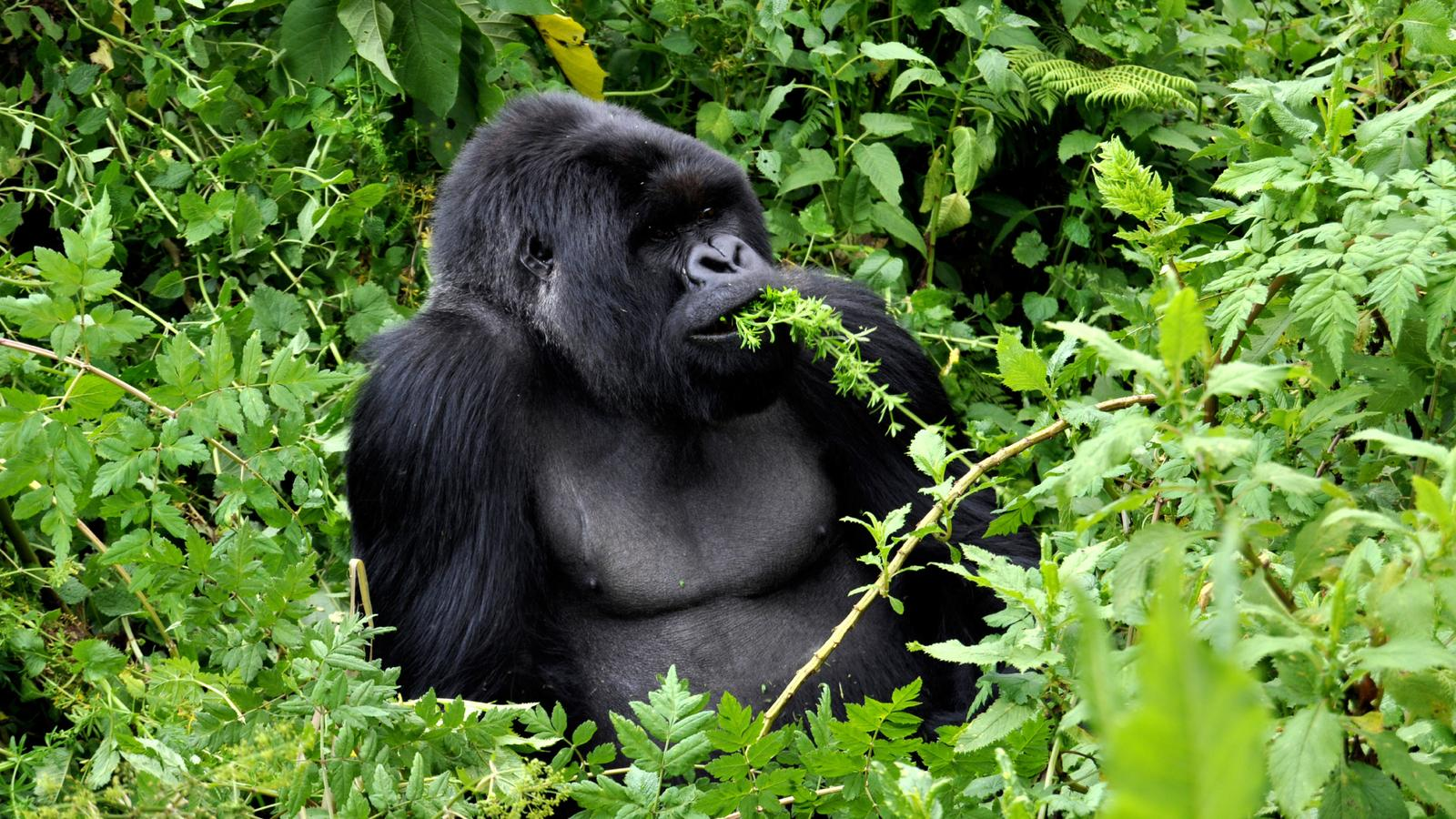 Culture Amp Wildlife Of Uganda Amp Rwanda In Uganda Africa