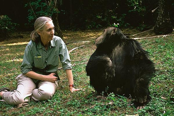 The Jane Goodall Collection