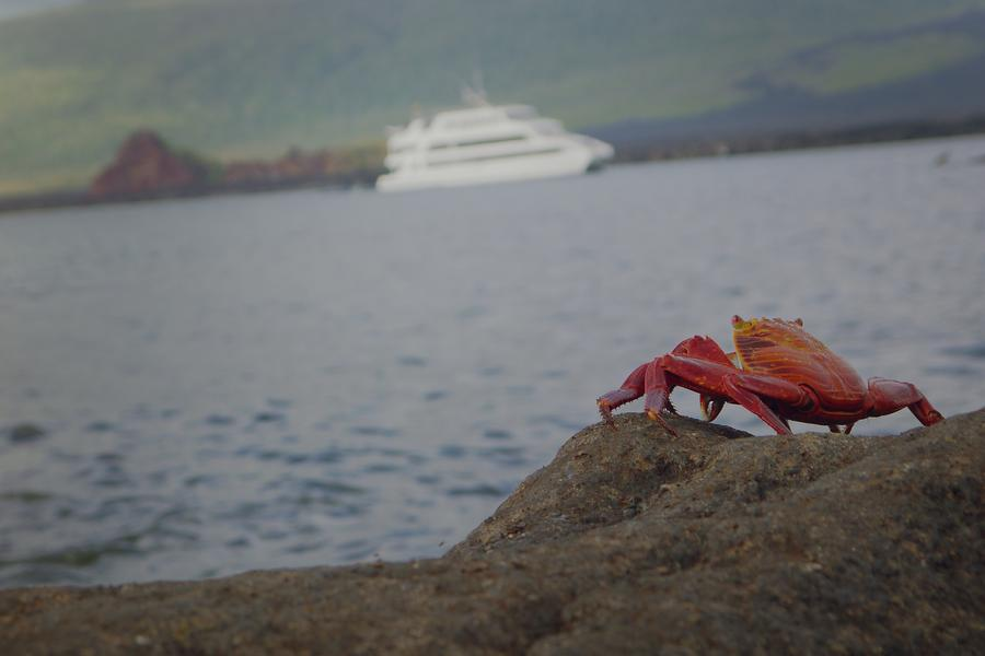 On your way to the Galápagos? G Adventures' very own Julia Wong shares her top five must-haves.