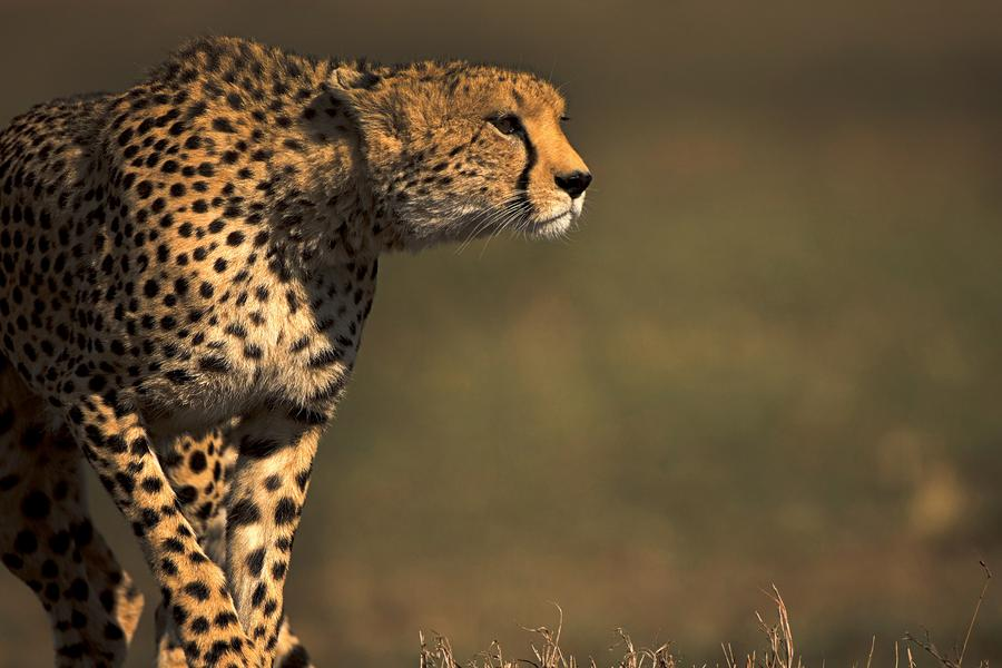 Kenya is one of the world's greatest destinations, known for its remarkable diversity of landscapes, wildlife and cultures