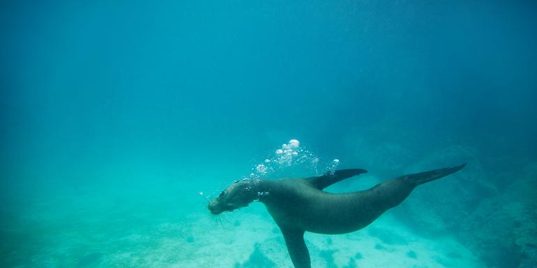 Galápagos Land & Sea — Central & South Islands aboard the Yolita