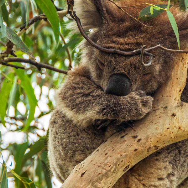 Highlights of Australia and New Zealand