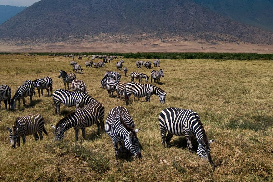Join us on this traveller-made safari tour as we chart the landscapes and wildlife of East Africa.?