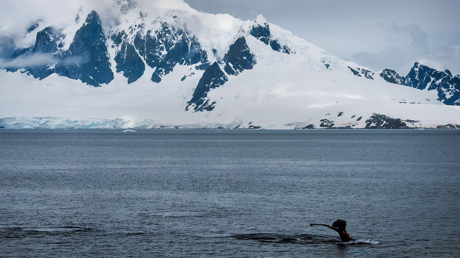 Journey to the antarctic peninsula in antarctica for Best trips to antarctica