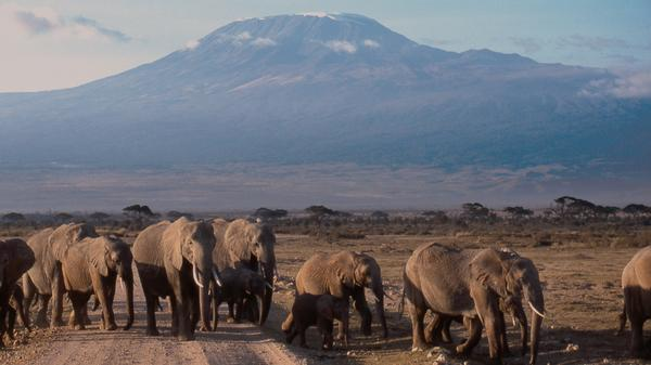 Unsure of how to prepare for for an active trip? We asked a recent Kilimanjaro summiter for her tips on how to prepare for the trek of a lifetime.