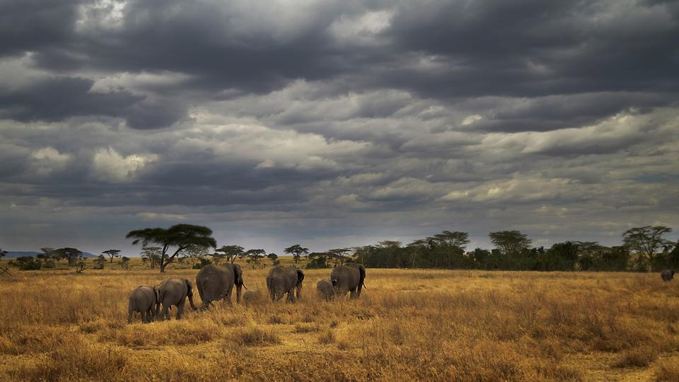African Safari Tanzanias Ngorongoro Crater G Adventures