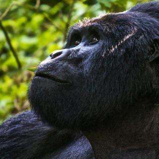 Uganda Overland: Gorillas & Chimps