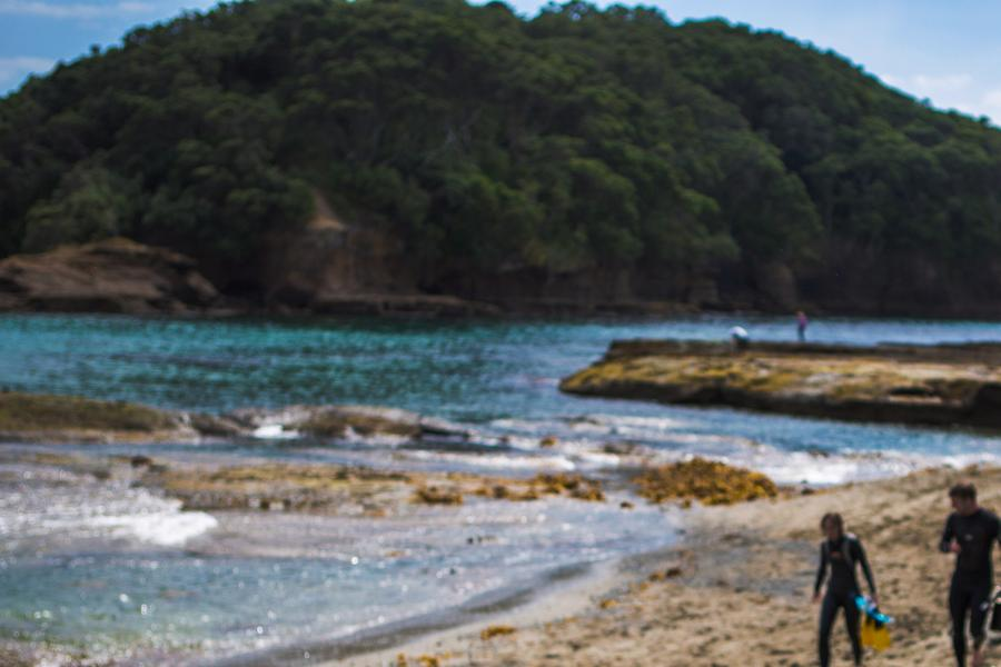 Regardless of the season, there's plenty to see and do right in Auckland—but travelling further afield opens up your options considerably! Travel writer Brendan Lee offers up a season-by-season breakdown of the best this North Island urban centre has to offer.