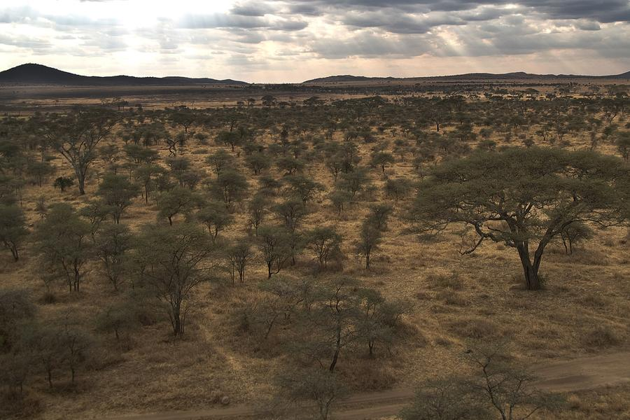 """In the language of Africa's Maasai, Serengeti means """"Endless Plain"""". Just watch this video to see why."""