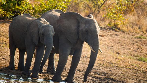 Join us on safari in South Africa with these five roaring regrams.