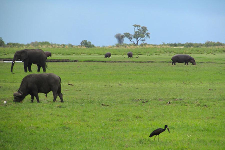 Nomadic Matt talks about his favourite part of Africa, the Chobe River