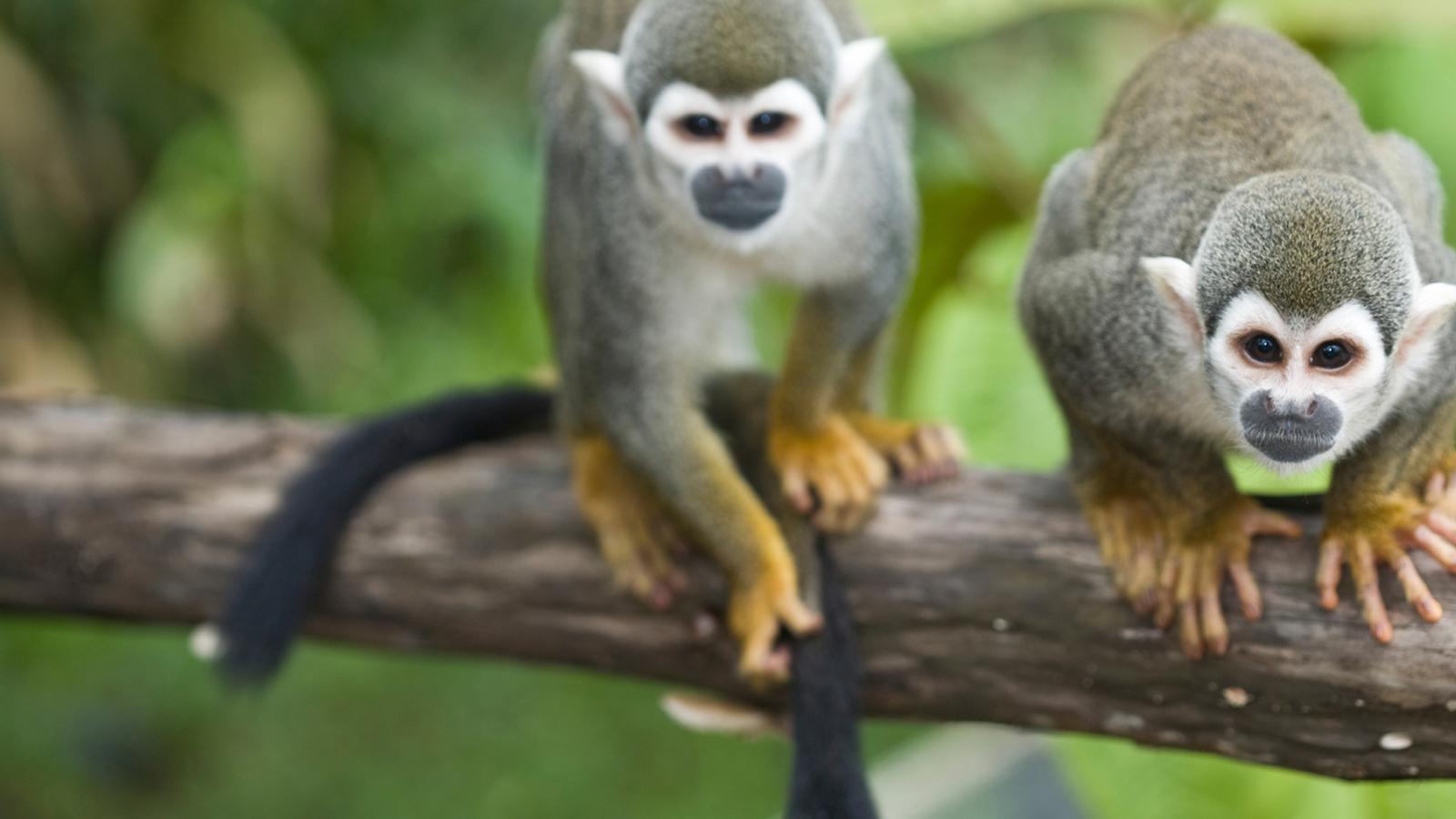 Local Living Ecuador Amazon Jungle In Ecuador South