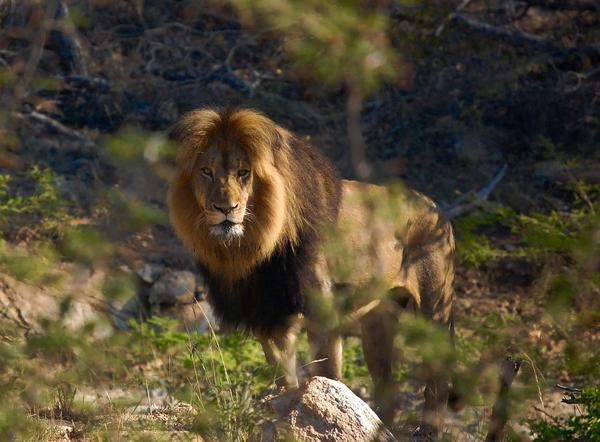 A few fascinating facts about your favourite safari beasts