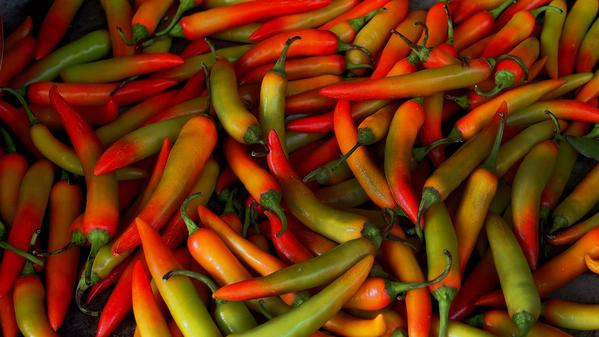 Wanderer-in-Residence Jodi Ettenberg explores the history of the chili pepper in this latest installment of her mouth-watering series.