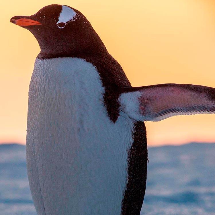 Antarctica Expedition Cruises - G Adventures