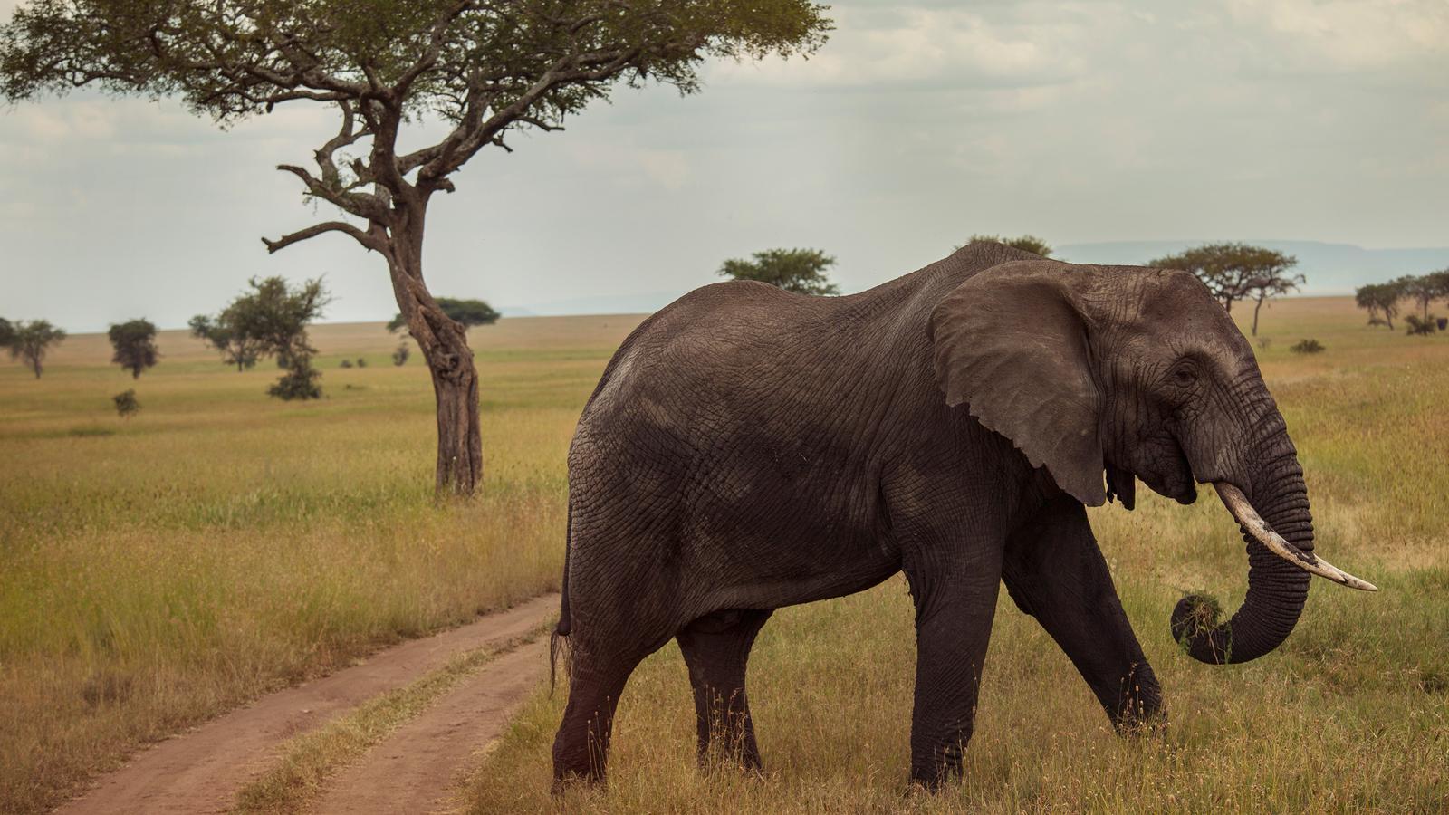 Safari in der serengeti victoriafälle in tansania afrika g