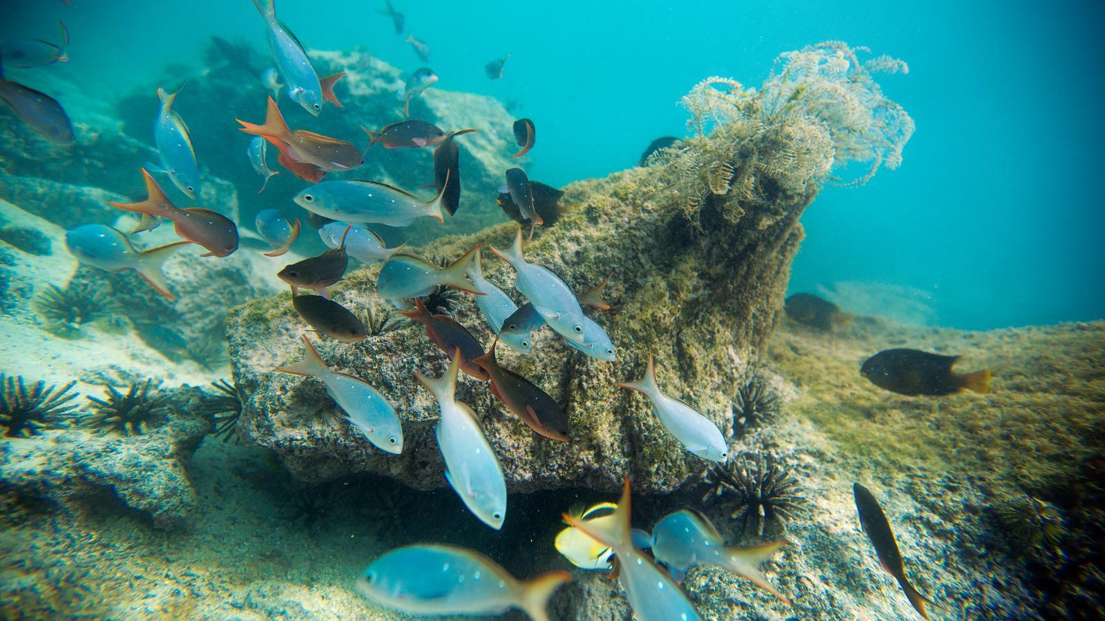 Adventuer Tour Galapagos Island