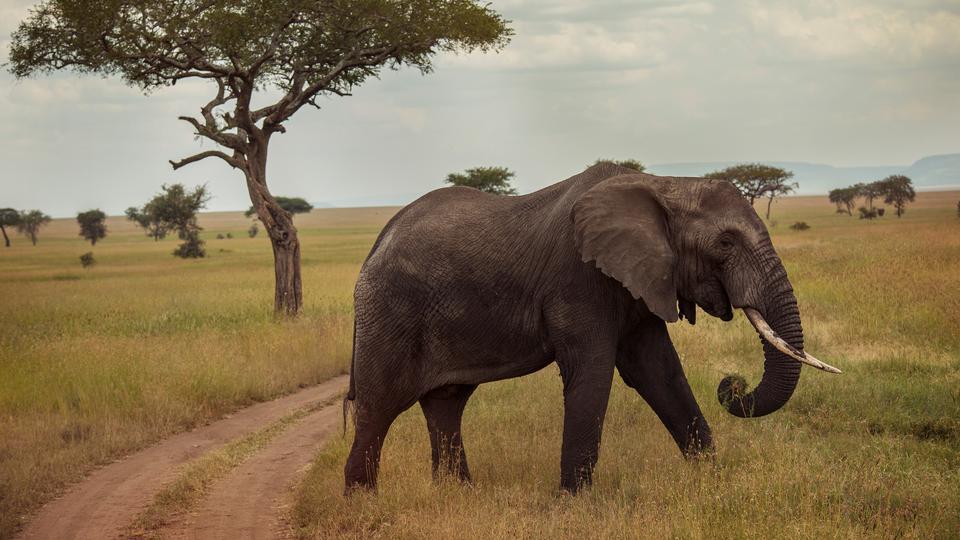 Tanzania Tours & Travel - G Adventures