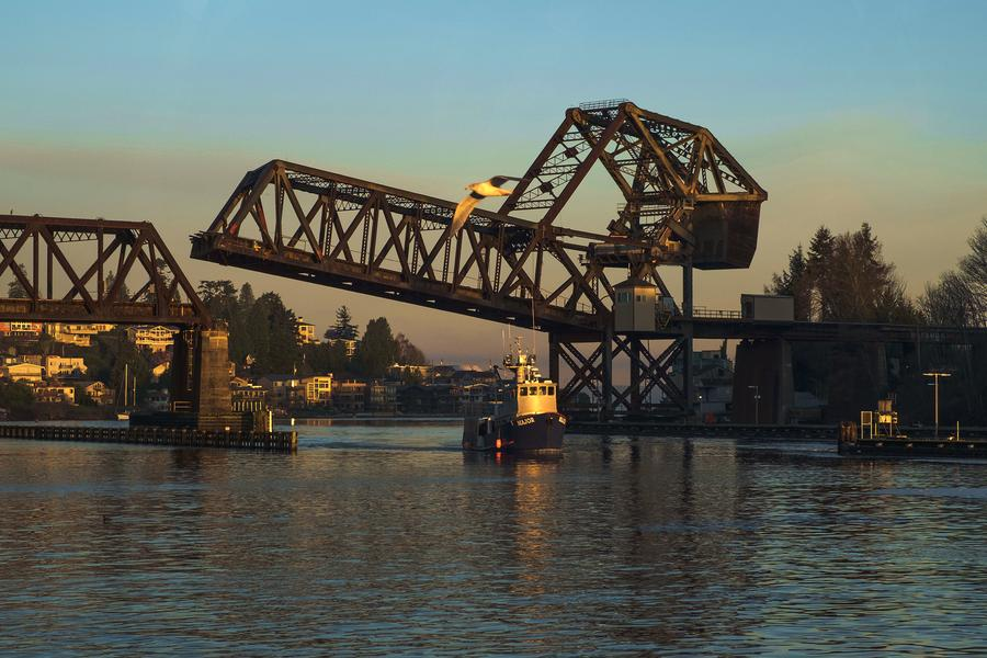 Seattle resident Pam Mandel meditates on the pink fish's legendary migration