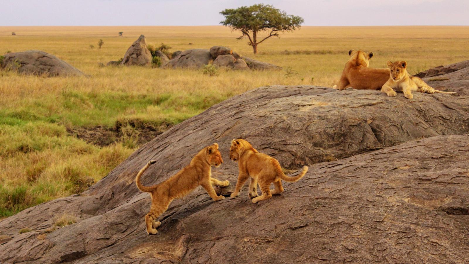 Ostafrika Overland - Serengeti & Safari in Uganda, Afrika ...