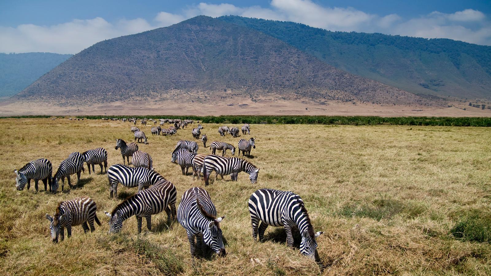 Erlebnisreise durch tansania & sansibar in tansania afrika g