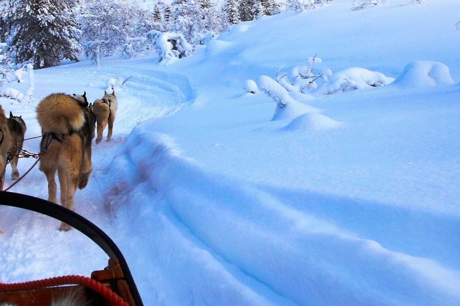 Think winter puts a limit on adventure? Travel blogger Becki Enright begs to differ with these adrenalin-inducing activities in Northern Europe.