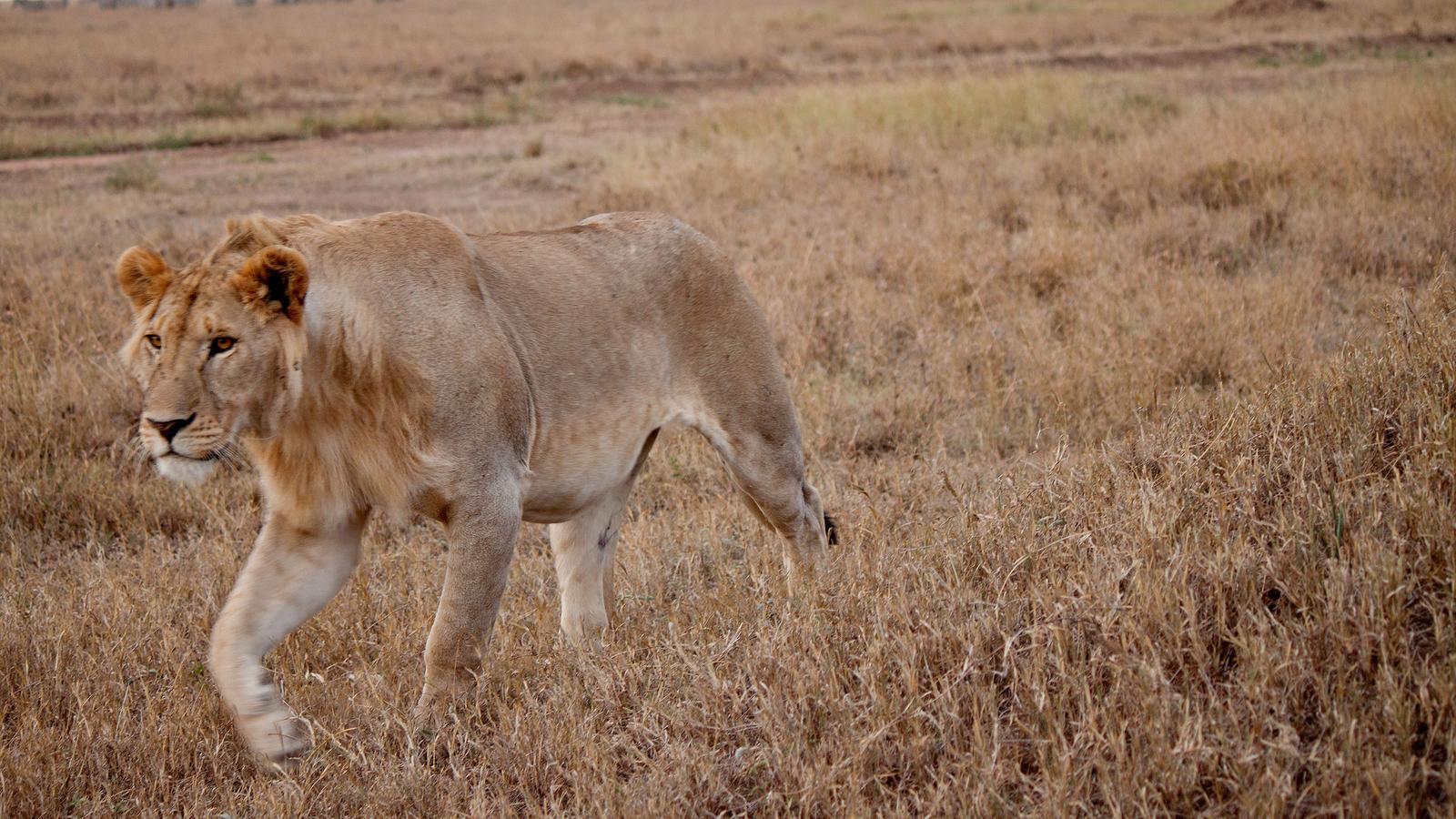 Serengeti to Victoria Falls Overland: Night Stars & Spices