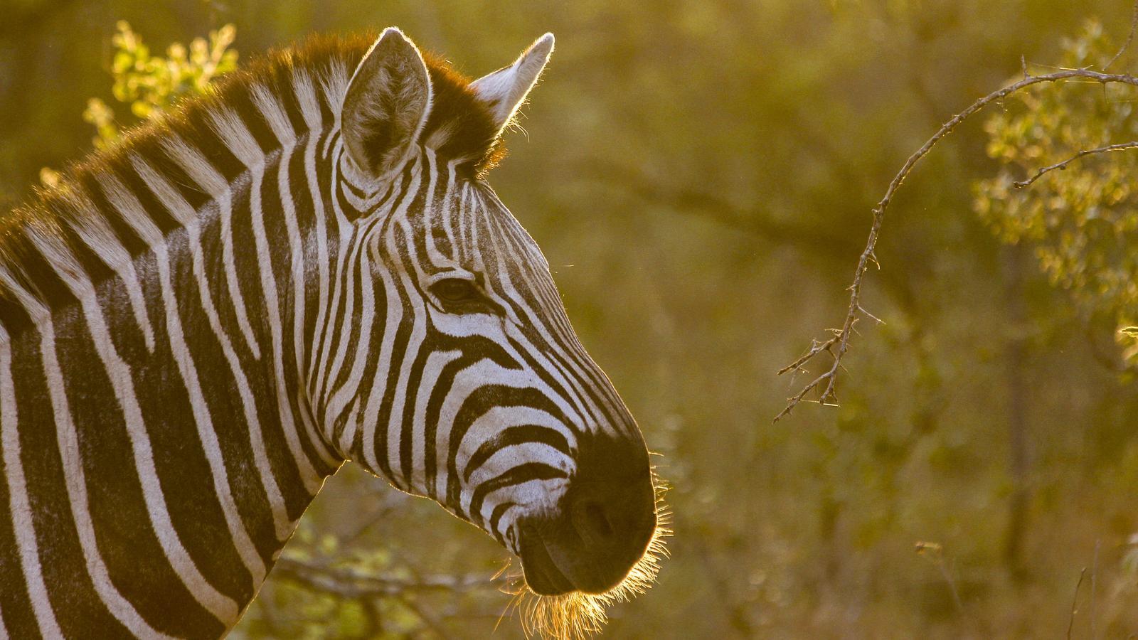 Der Süden Afrikas nach Maß: Safari & Camping