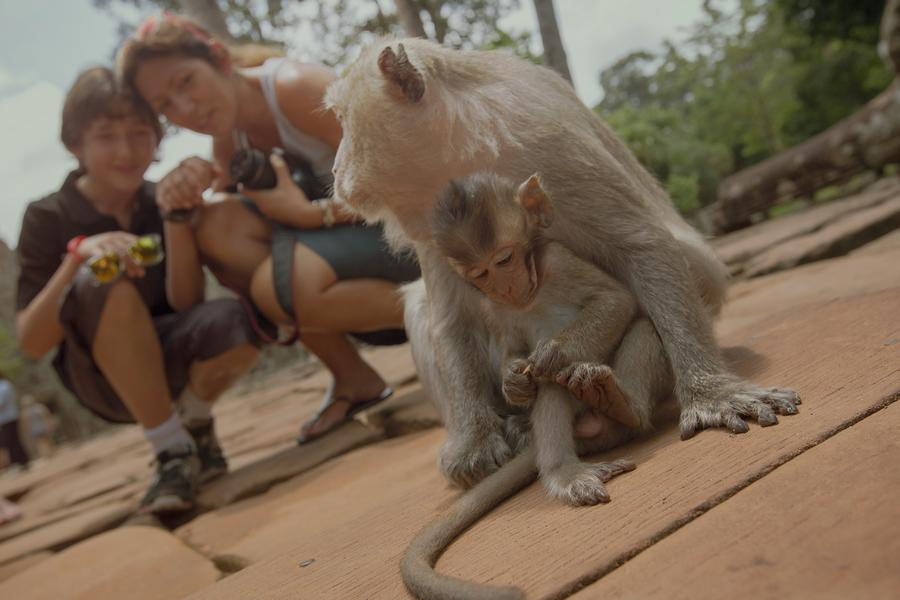Ring in the Year of the Monkey with a round-the-world round-up of Instagram's favourite monkeys!