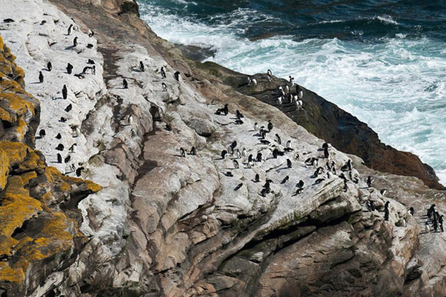 If more people knew about the Falklands, I think it would be higher up on the list of destinations for most people