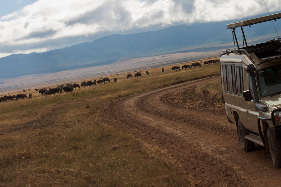 Have you heard about the herd? Check out this infographic about the great migration in Africa