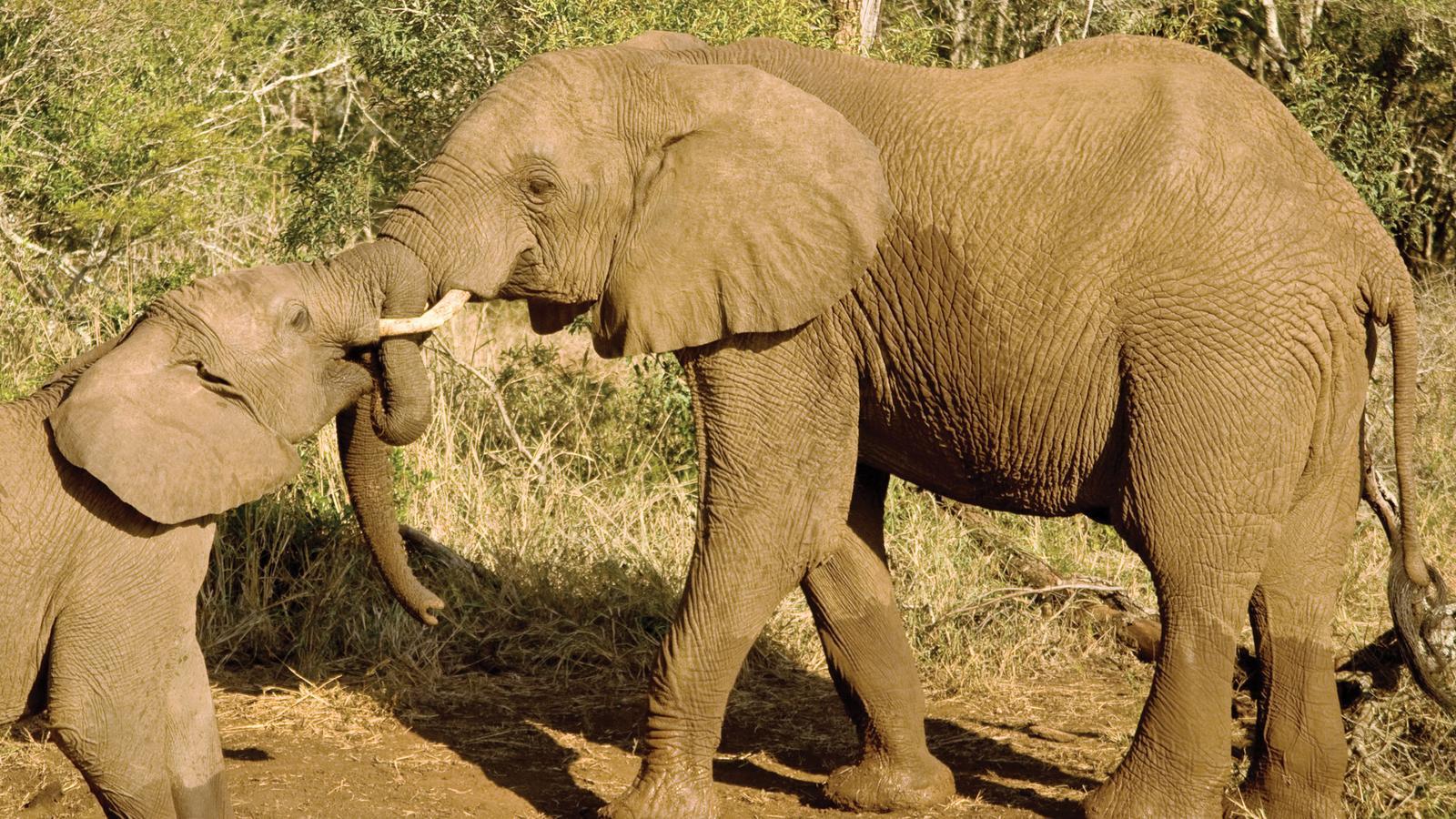 how to choose an african safari