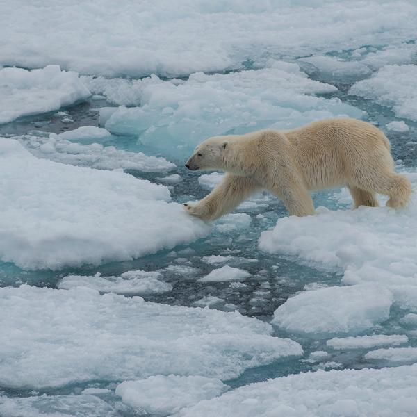 Realm of the Polar Bear