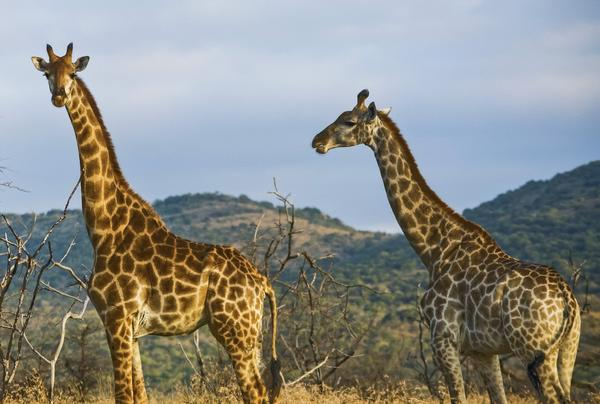 A first-hand account of responsible wildlife tourism on the Masai Mara