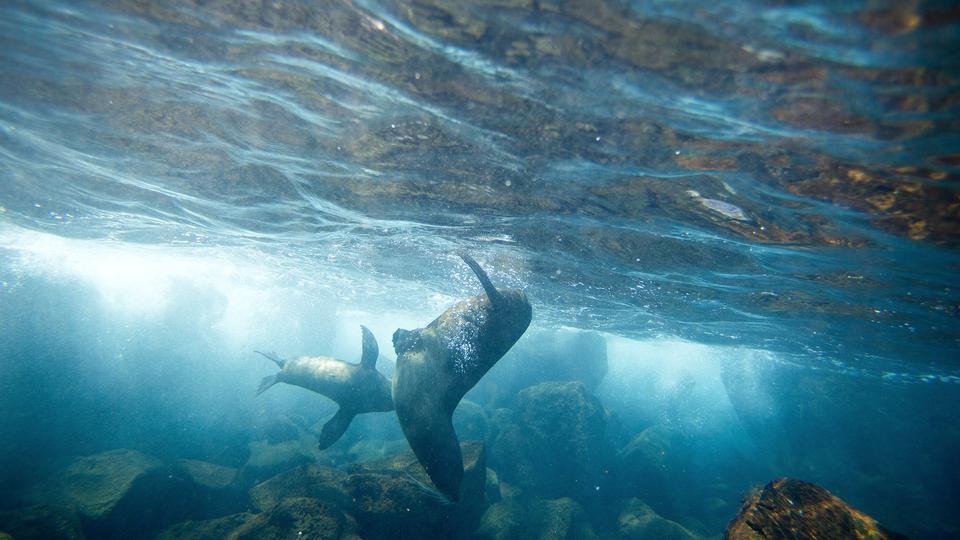 Galápagos Islands Cruise - G Adventures