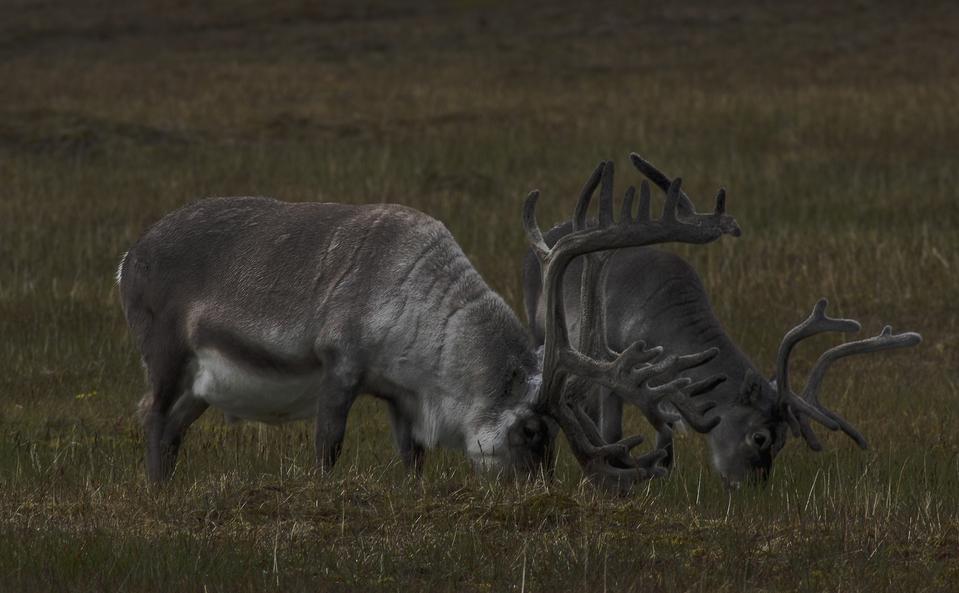 Antarctic Animals Vs Arctic Beasts A Quick Look At Who Lives Where