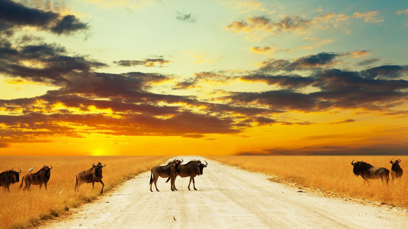 Afrika die ultimative reise in südafrika afrika g adventures