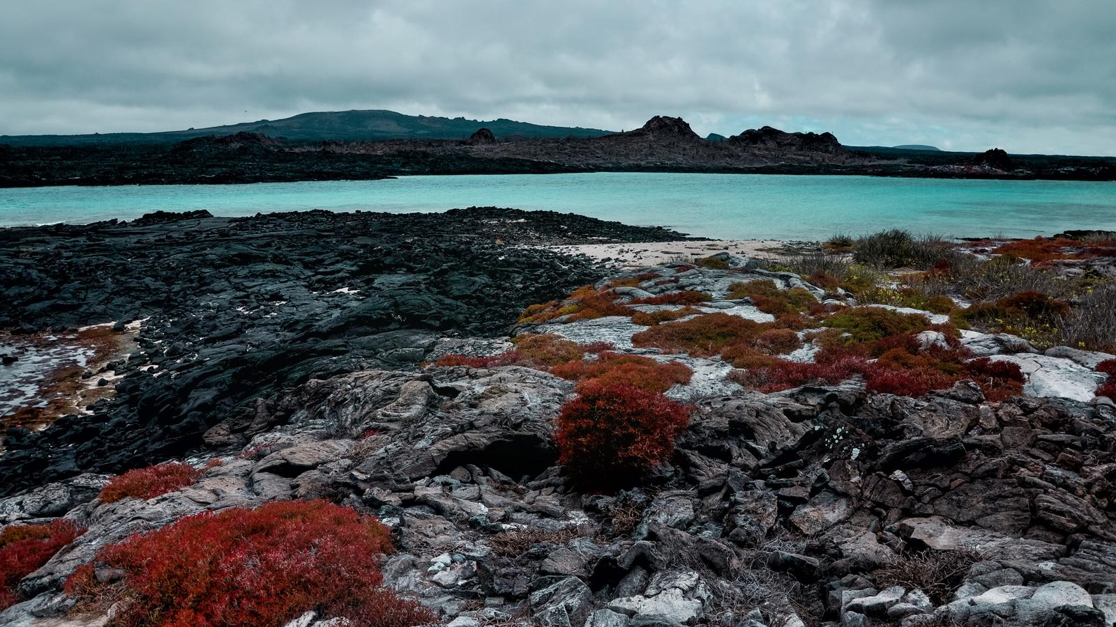 Shrubs growing out of the volcanic rocks in the Galapagos