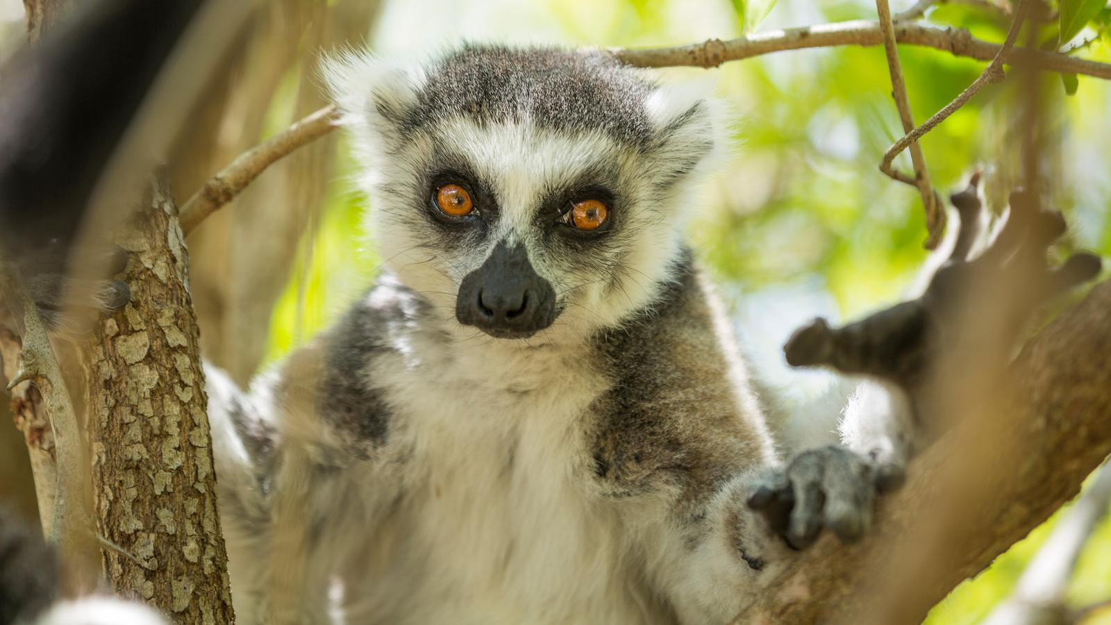 Northern Madagascar Explorer In Madagascar Africa G