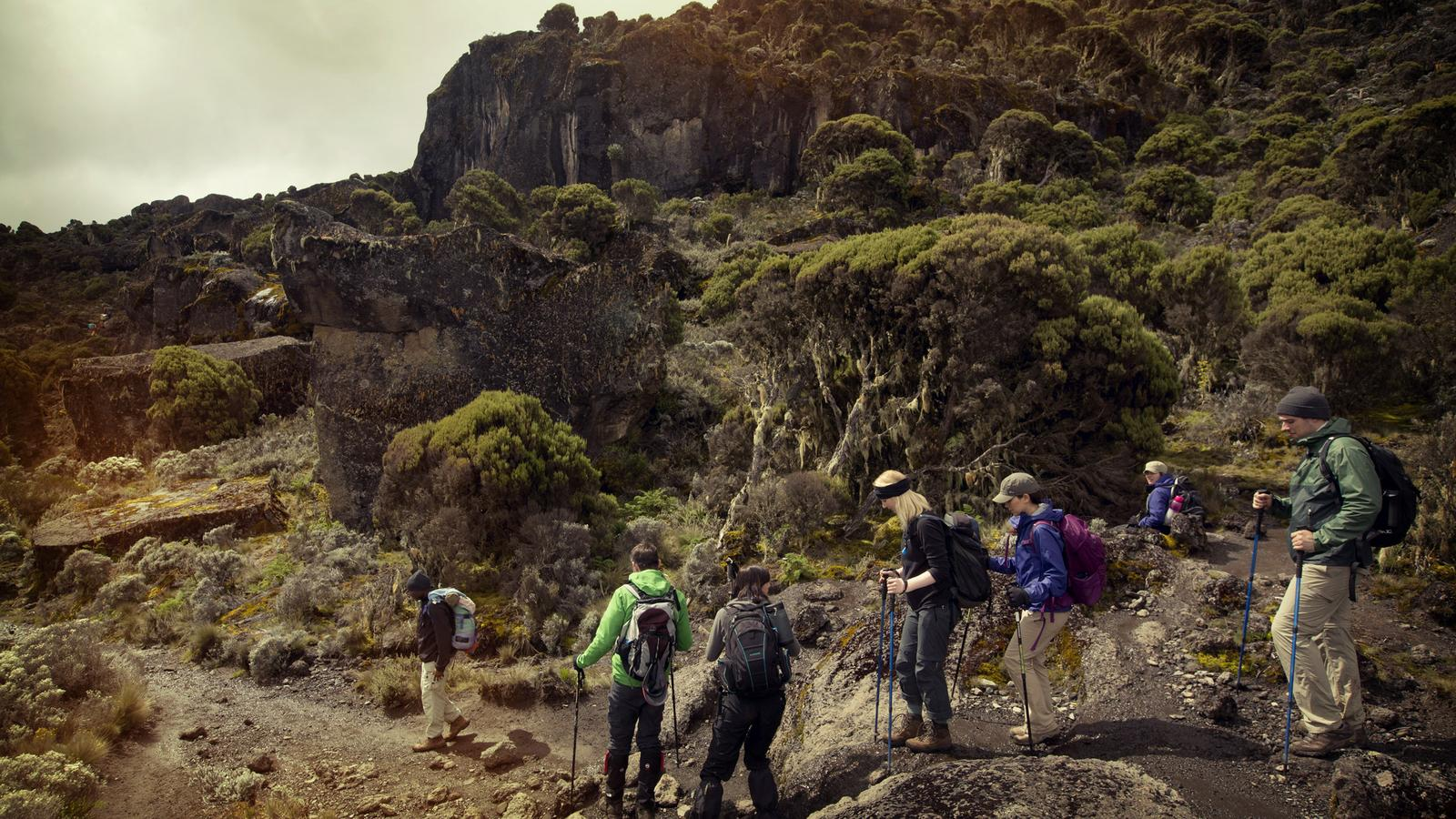 Group of travellers hiking up Mt.Kilimanjaro during Day 3 of the trek in Tanzania