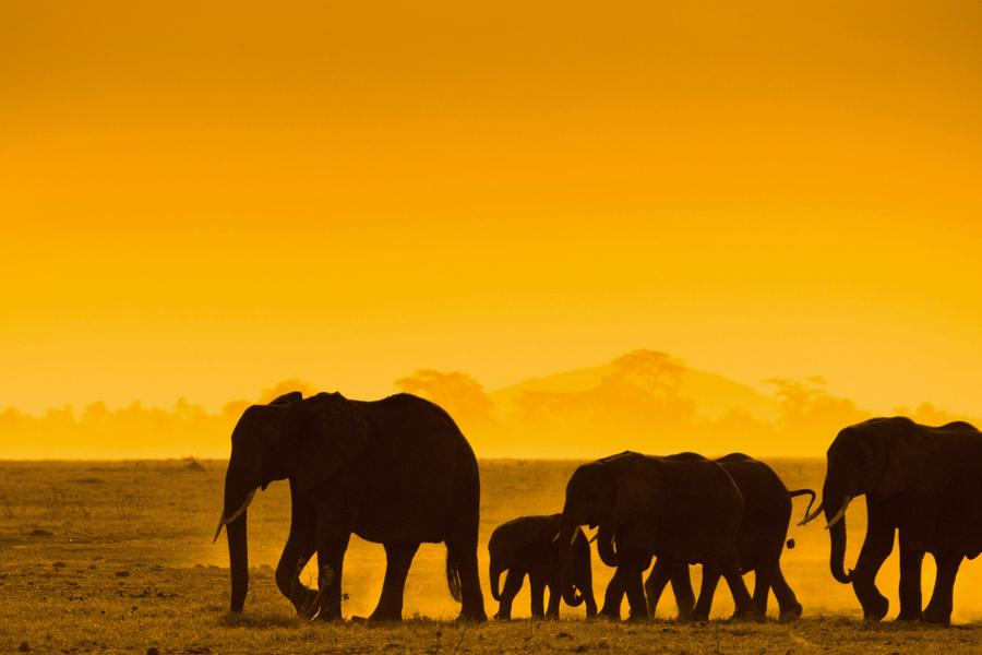 Find out what a night on board one of the most epic train rides in Africa is like