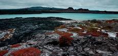 Galapagos  North, Central & South Islands aboard the Estrella del Mar