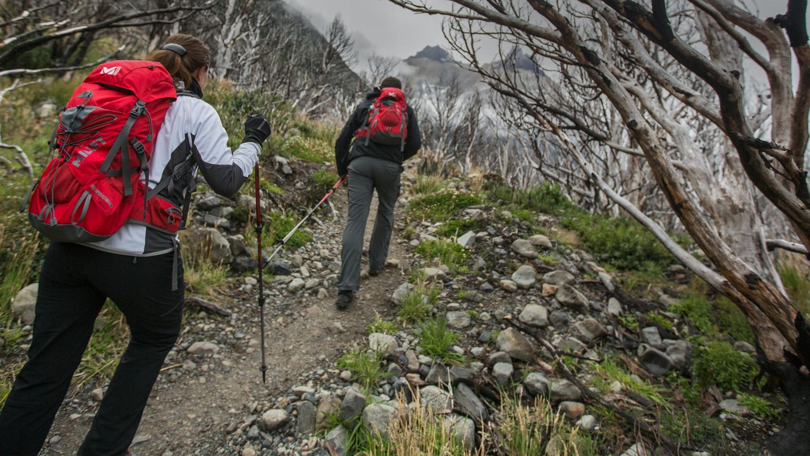 Travellers hiking in the Dead Forest in Patagonia