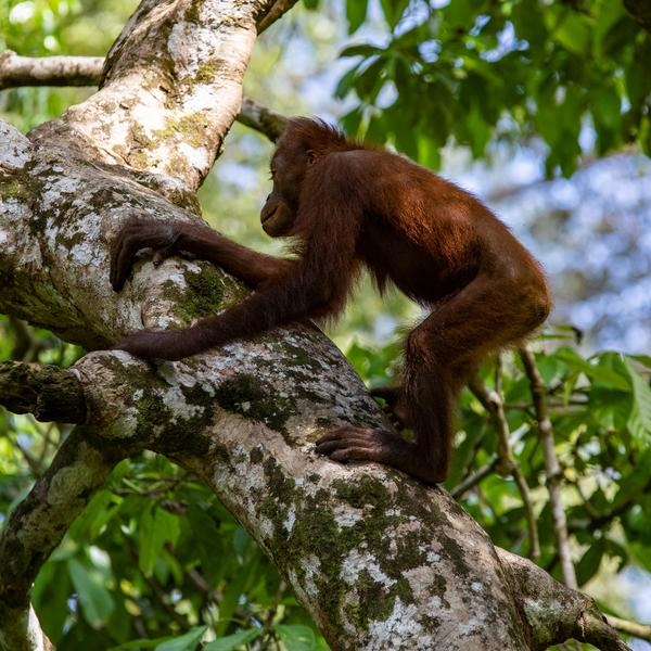 Highlights of Borneo