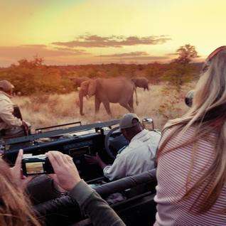 Kruger Safari Turu
