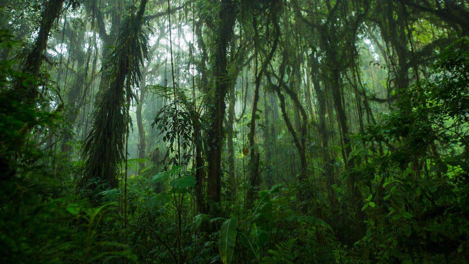Abenteuer Costa Rica & Panama