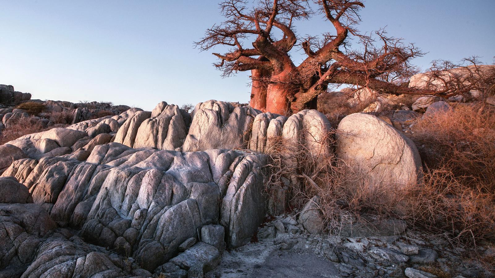 Kruger, Victoria Falls & Botswana Safari in South Africa