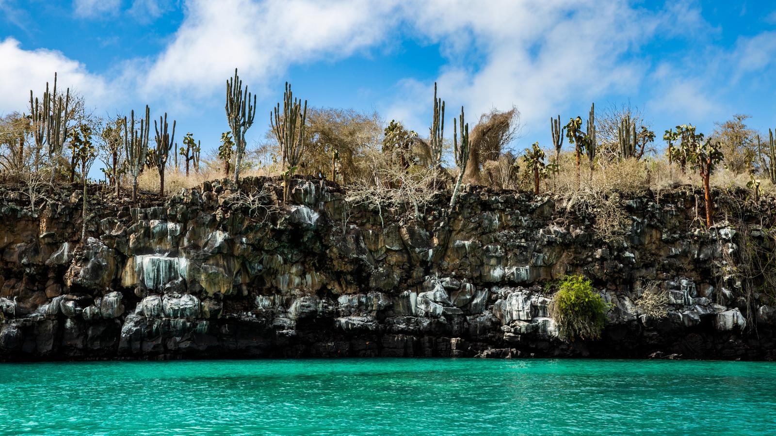 Galápagos Adventure: Snorkelling & Sea Lions